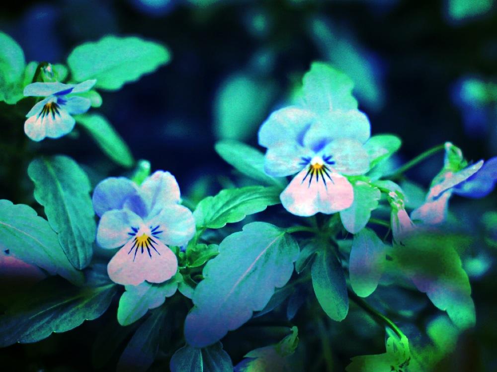 flower fotoprint